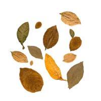 FlavourArt eLiquid 7 Leaves 10ml