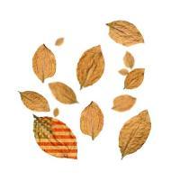 Flavour Art Virginia (Americano) 10ml